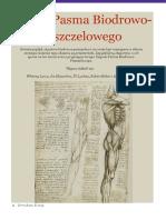 Zespół Pasma Biodrowo- Piszczelowego