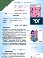 1.Bacillus Anthracis-Geldres Molina AV3