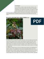 10 Plantas Venenosas de Mexico