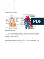 08. Anatomy and Physiology