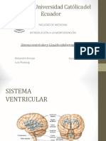 Sistemaventricular ROY