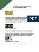 GALERÍA DE LA BIODIVERSIDAD.docx