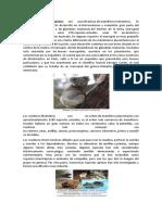 Animales Marsupiales Hervivoros Carniv
