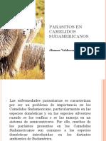 Parasitos en Camelidos Sudamericanos