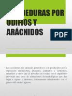 ARACNIDOS(1)