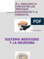 Neuronas y Cerebro (1)