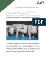 Productividad y Costos en Porcinos