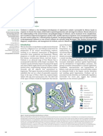 2008 Liver Sirosis.pdf