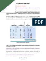 AT1-IP La Organización de Las Células y Intercambio de Sustancias