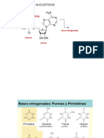 Imagenes Metabolismo de Nucleotidos