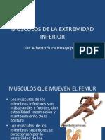 10 Musculos Que Mueven El Femur