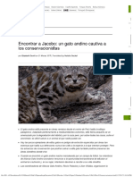 Encontrar a Jacobo, un gato andino cautiva a los conservacionistas.pdf