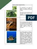 Animales en Peligro de Extinción México