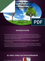 Presentacion Anato(m a f )