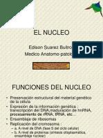 02nucleo Celular (1)
