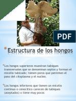 Clase3estructuradeloshongos2015 150928030722 Lva1 App6891 (1)