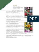 Clasificacion de flores.docx