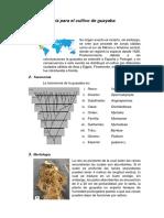 Guía Para El Cultivo de Guayaba