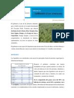 Informe Garbanzo 2016