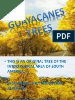 Guayacanes Trees