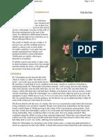 Alfalfa Medicago Sativa -- Dr. John Christopher, Master Herbalist