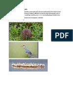 Professional wildlife photography.docx