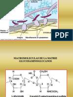 Matriz Extracelular, Membrana Diferenciaciones y Señalización 2012