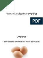 Animales Vivíparos y Ovipáros