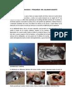 Caracteristicas Biologicas Del Calamar Gigante