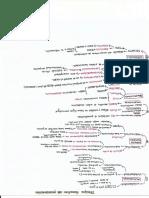 Principios Formativos Del Procedimiento -Mapa Conceptual