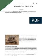 La Super Tortuga Que Salvo a Su Especie de La Extincion