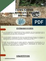 Comunidad Microbiana de Los Hongos