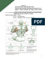 Tema 10. Caracteristica Tehnicii Îndeplinirii Exercițiilor Pentru Mușchii Deltoizi-2