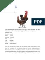 Tipe Dan Bangsa Ayam