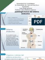 Fisiopatologia Toxica Del Sistema Endocrino