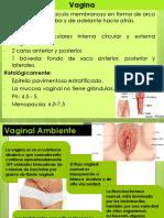 Vagina.pptx