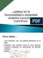 2 Cambios en La Funcionalidad e Integridad Sináptica (