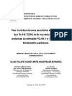 Vias Transduccionales Asociadas Al Receptor Tipo Toll 4