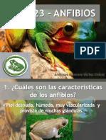 en023-anfibios-160204184429