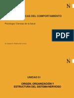 1. Ppt Sesion 1- Embriologia Del Snc (1)
