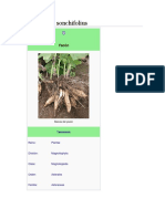 Smallanthus sonchifolius