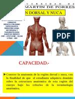 Clase Nuca y Region Dorsal