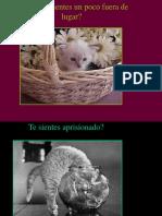 98-Mundo Gato..pps