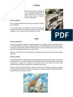 ADAPTACION Y DEFENSA DE LOS ANIMALES.docx