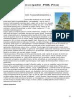 formula-as.ro-Puterea vindecătoare a copacilor - PINUL Pinus