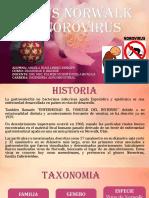 Virus Norwalk o Norovirus