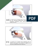 4.-ortodiogramas pto articulatorios.docx