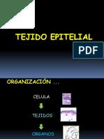 6_Tejido Epitelial.ppt (2)
