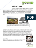 The Life of Pigs