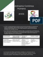 Gonadotropina Coriónica Humana